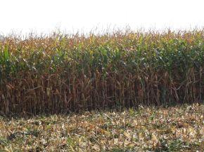 PW Plus - plus dla rolnictwa_3